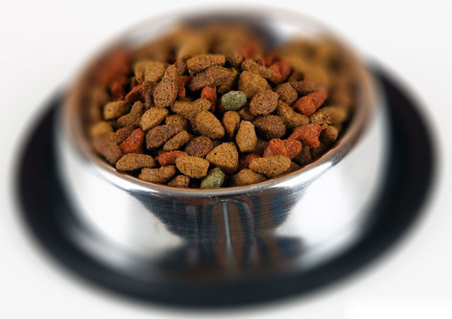 Dog Food Brands and why we are picky
