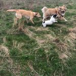 Labrador, Jack Russell and cross-breed dogs.