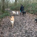 Four dogs under supervision in the woods.