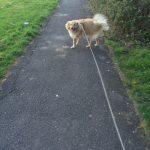 Cross breed dog on pavement.